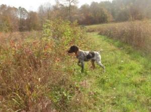 Pups 6 Jill web page